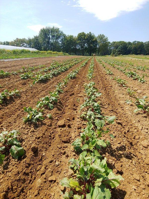 Farm Happenings for September 2, 2019