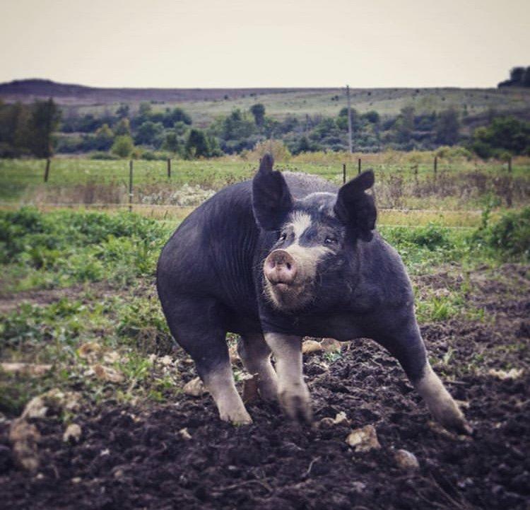 Previous Happening: Farm Happenings for September 22, 2019
