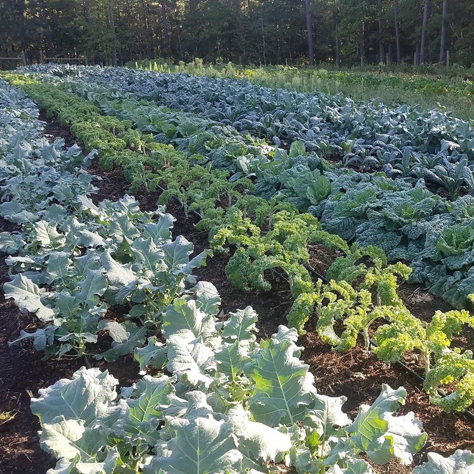 Farm Happenings for September 25, 2019