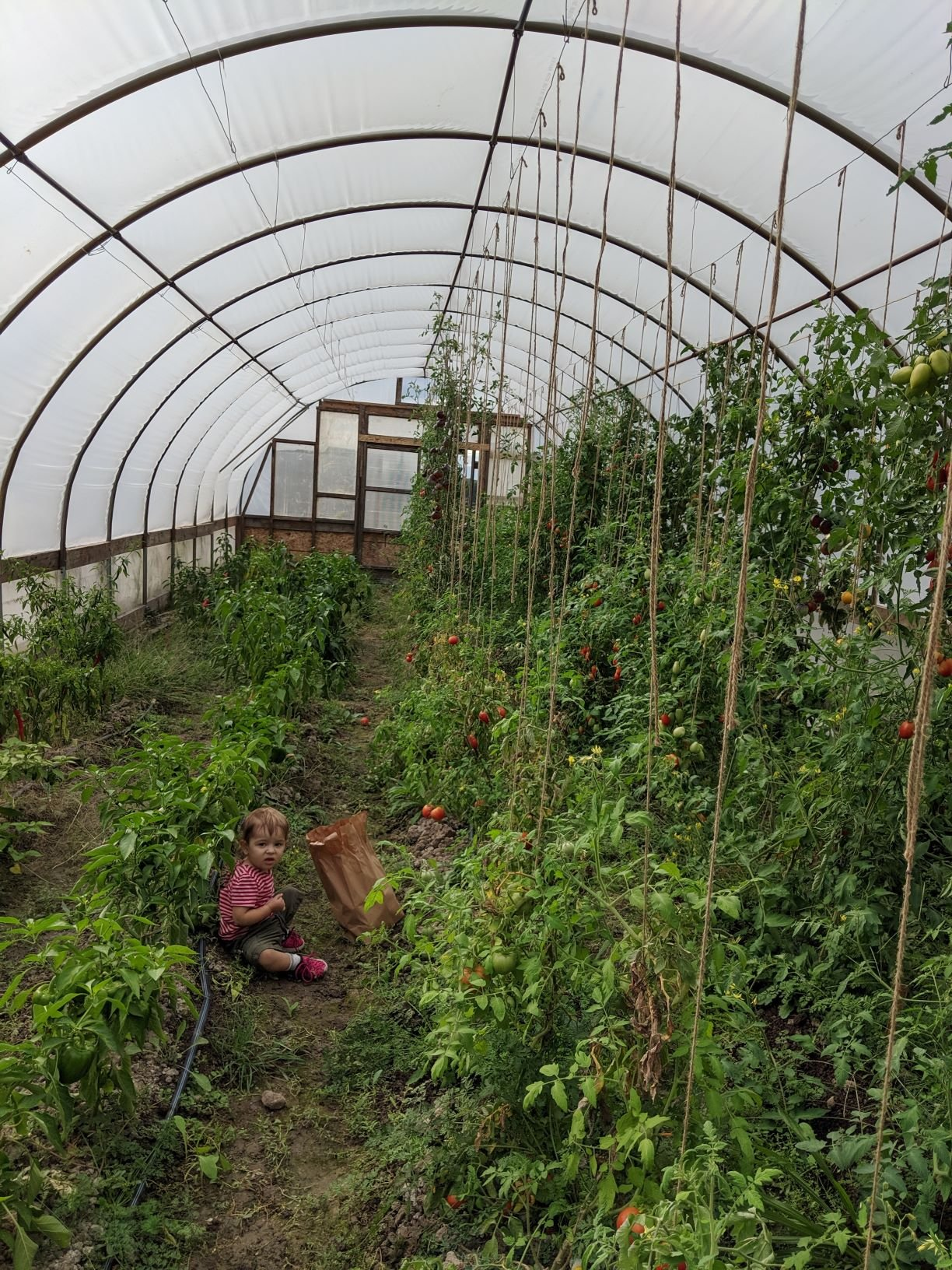 Veggie Share: Week 17