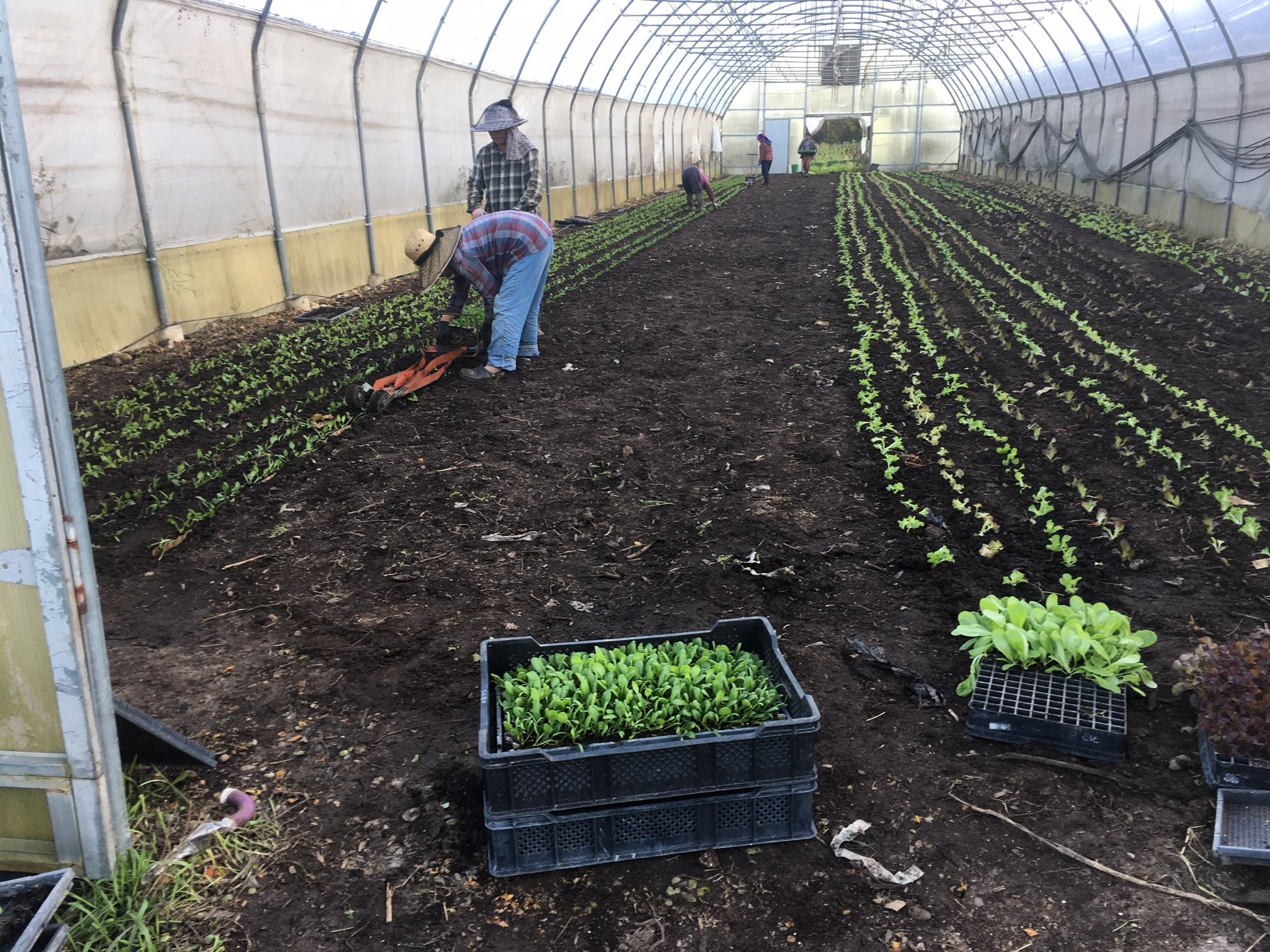Farm happenings for October 18th