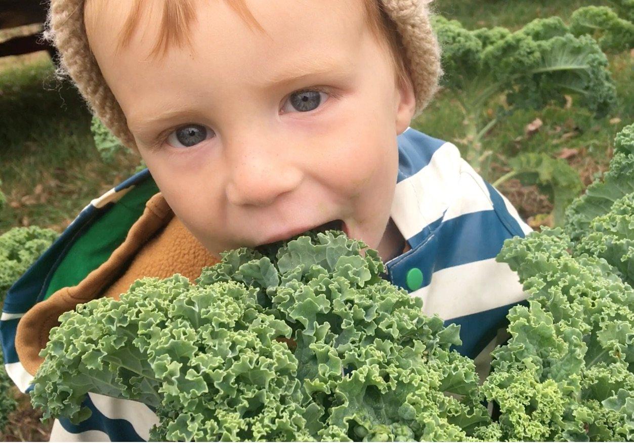 Why do vegetables taste sweeter in the winter?