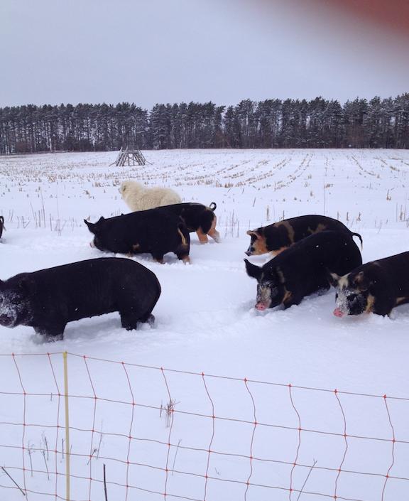 Next Happening: Cooper's CSA Farm Happenings Nov 6-9 2019 Winter Spring Farm Box