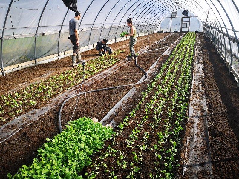 Next Happening: Farm Happenings for November 7, 2019
