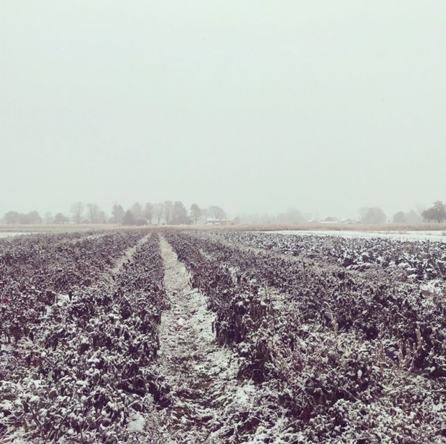 Previous Happening: Snowy November Days