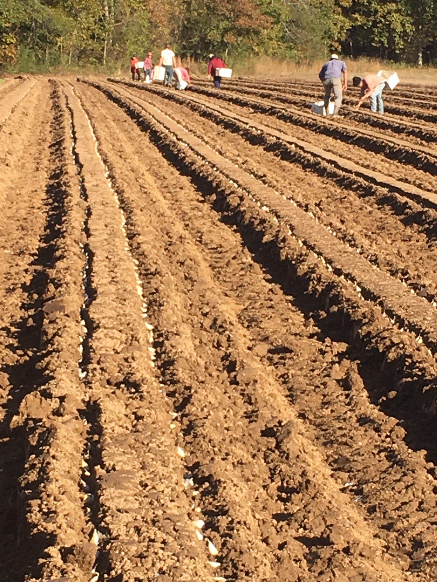Previous Happening: Farm Happenings for November 11, 2019