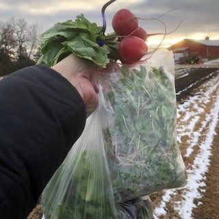 Farm Happenings for December 4, 2019: Week 10 out of 12!