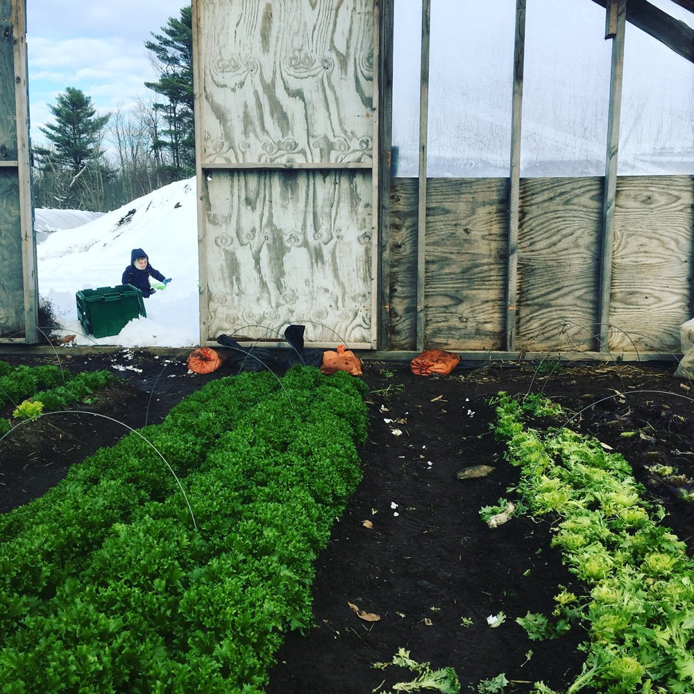 Previous Happening: Farm Happenings 12/23/19: Share Delivery the Monday! Sign up for Winter Bounty & Update from Bahner Farm