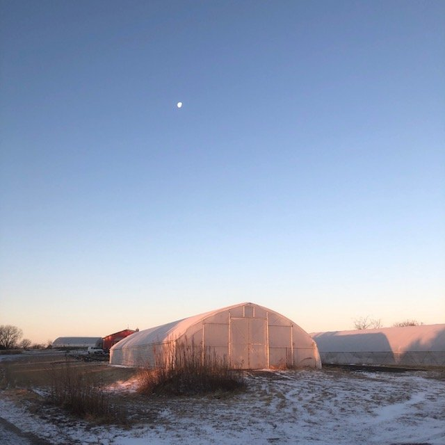 Next Happening: Farm Happening for January 22, 2020: Welcome to the Winter CSA!