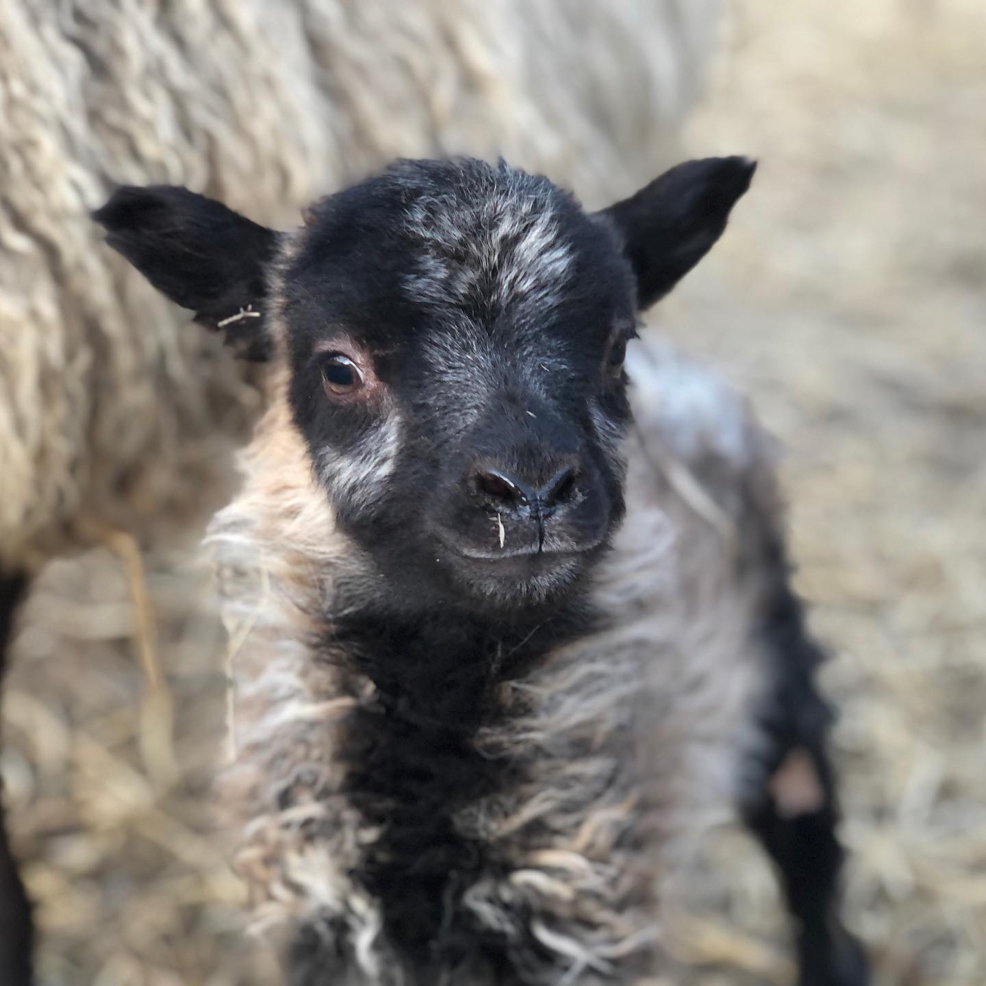 Farm Happenings for March 3, 2020