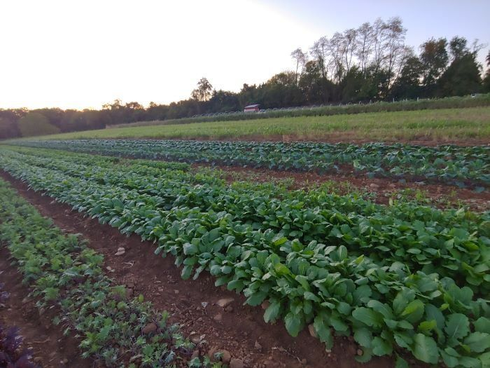 Farm Happenings for March 20, 2020