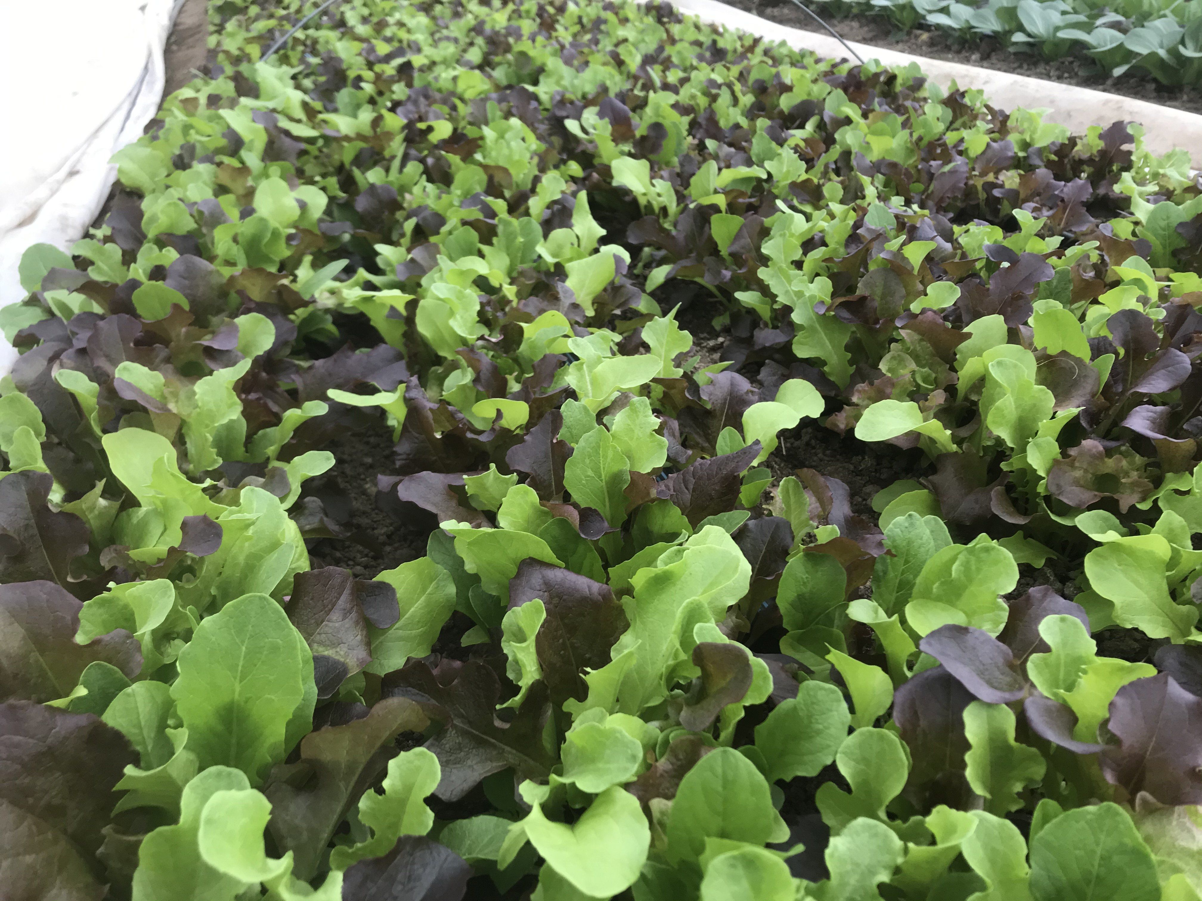 Farm Happenings for March 31, 2020