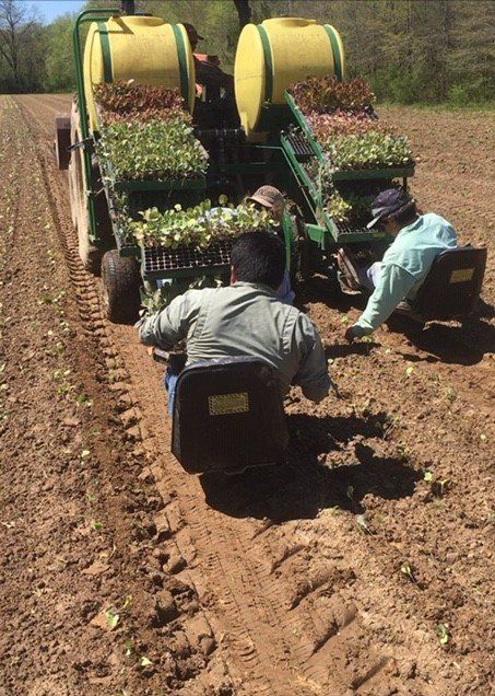 Next Happening: Farm Happenings for April 6, 2020