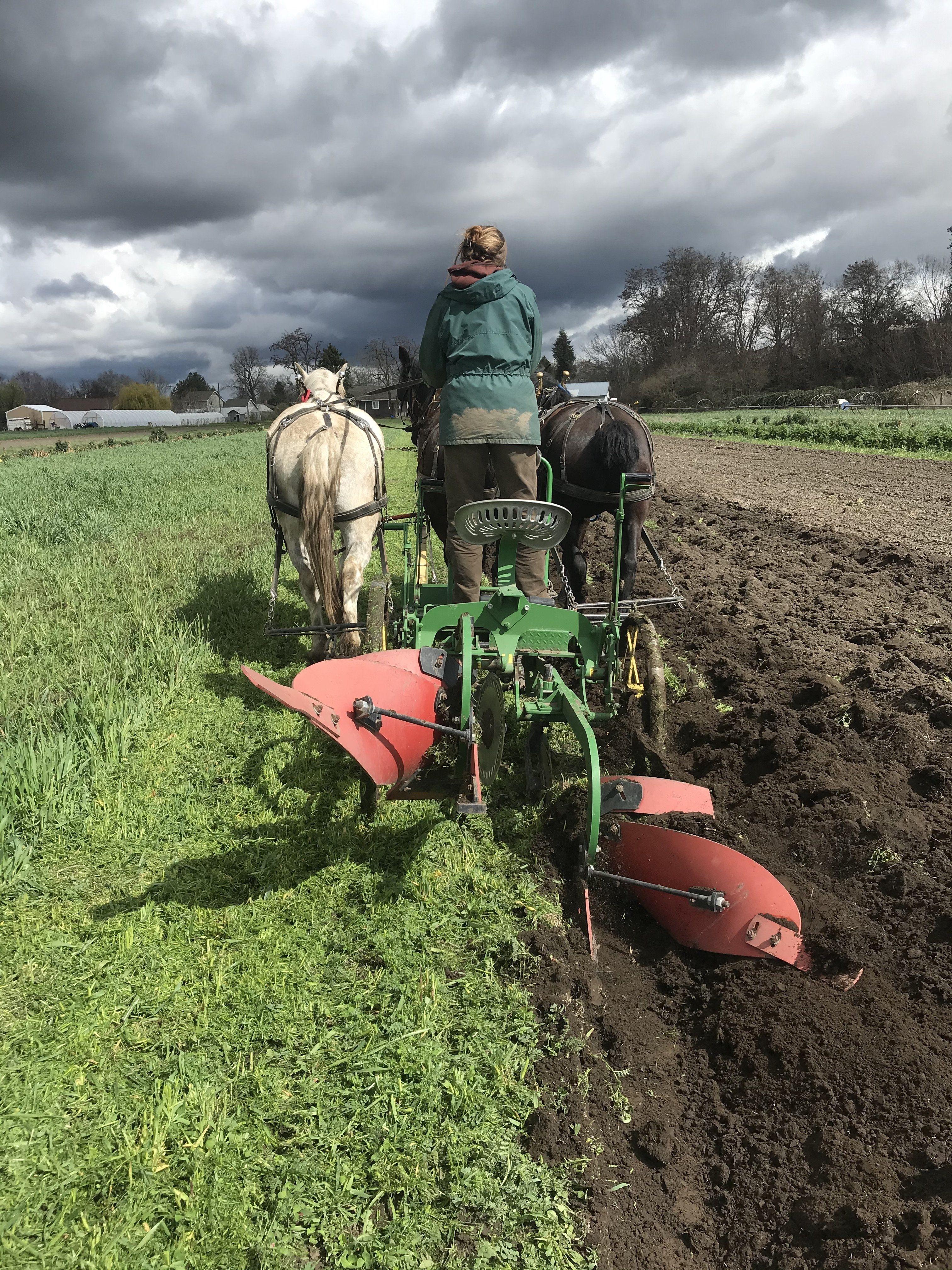 Farm Happenings for Friday April 10, 2020 (Walla Walla)