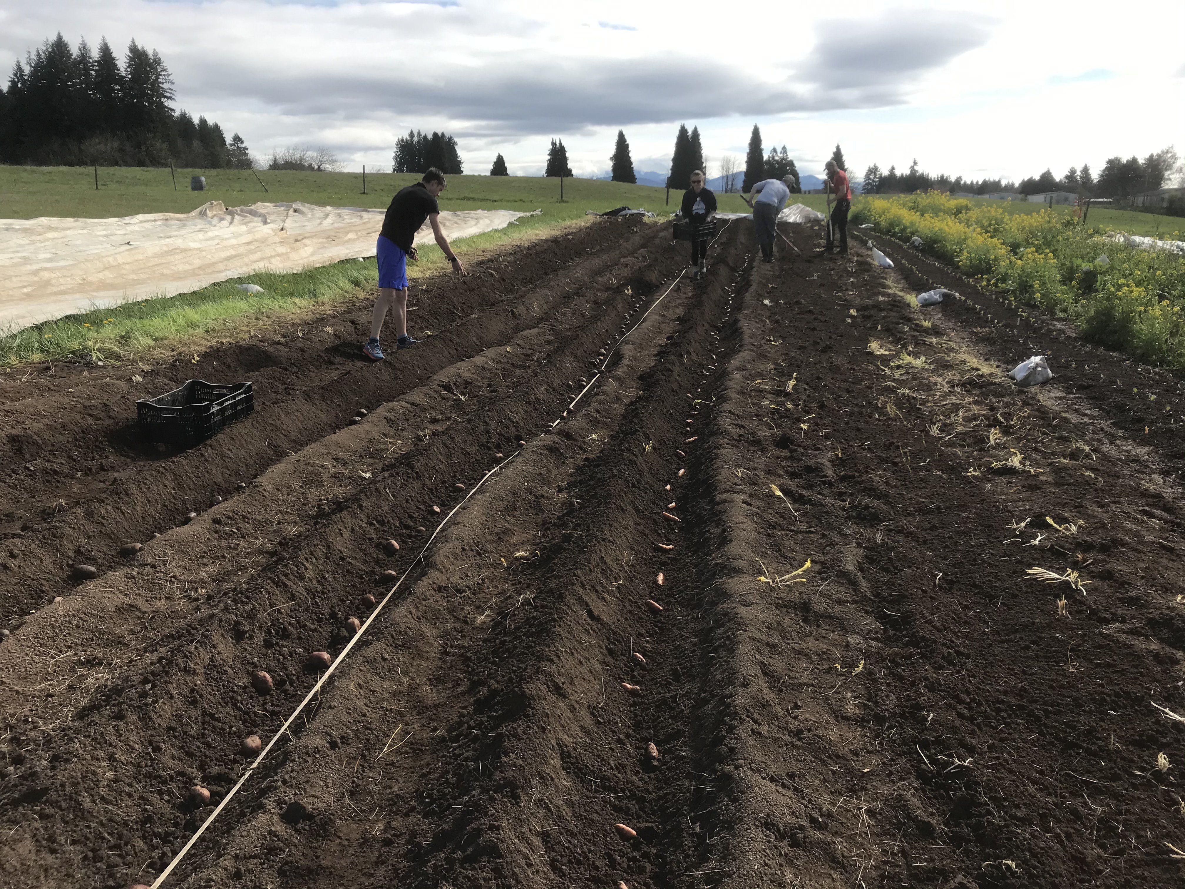 Farm Happenings for April 10, 2020