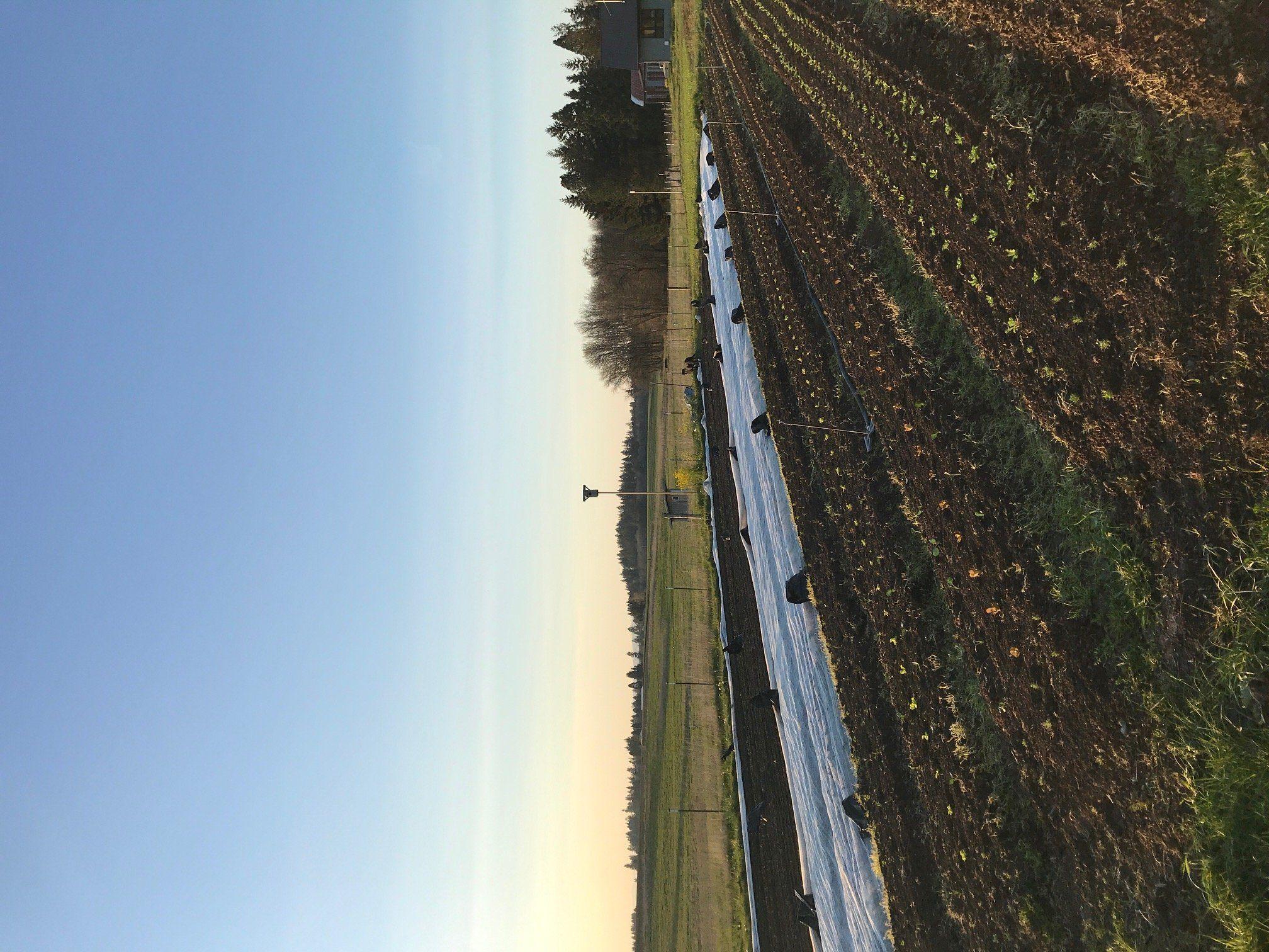 Farm Happenings for April 11, 2020