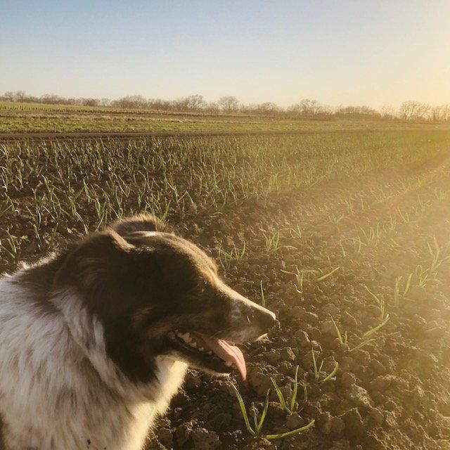 Farm Happenings for April 15 & 16, 2020: Start of Spring Salad Subscription!