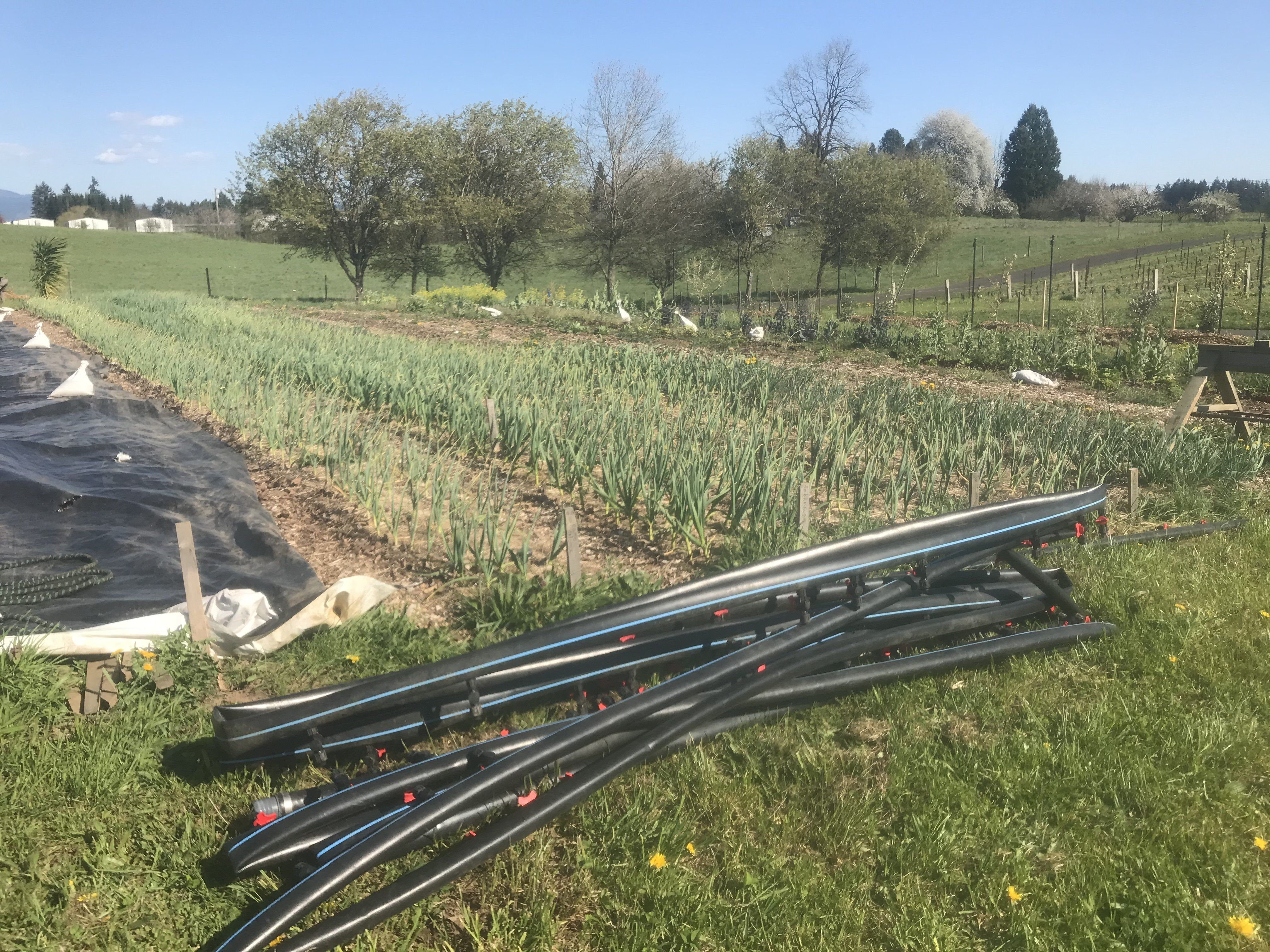 Farm Happening April 13th