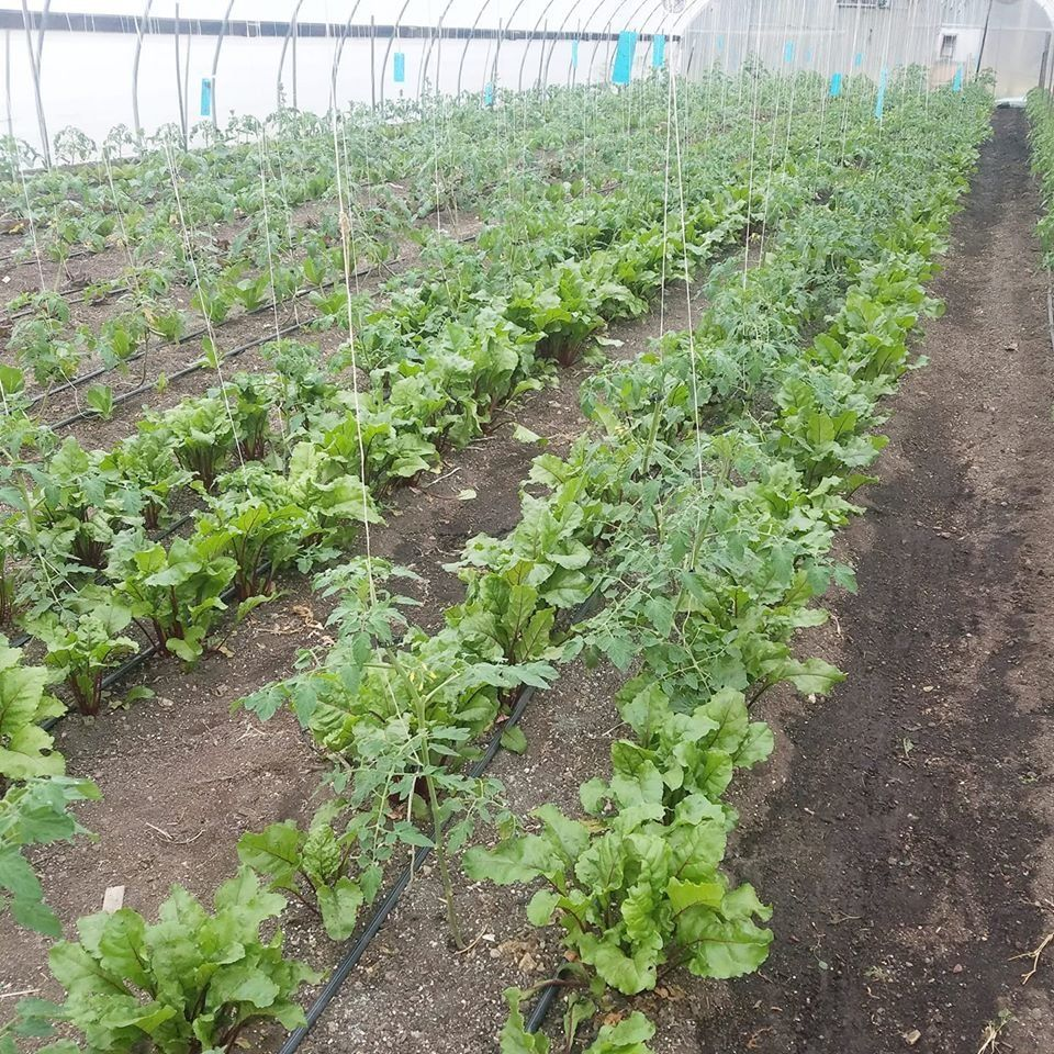 Farm Happenings for April 16, 2020