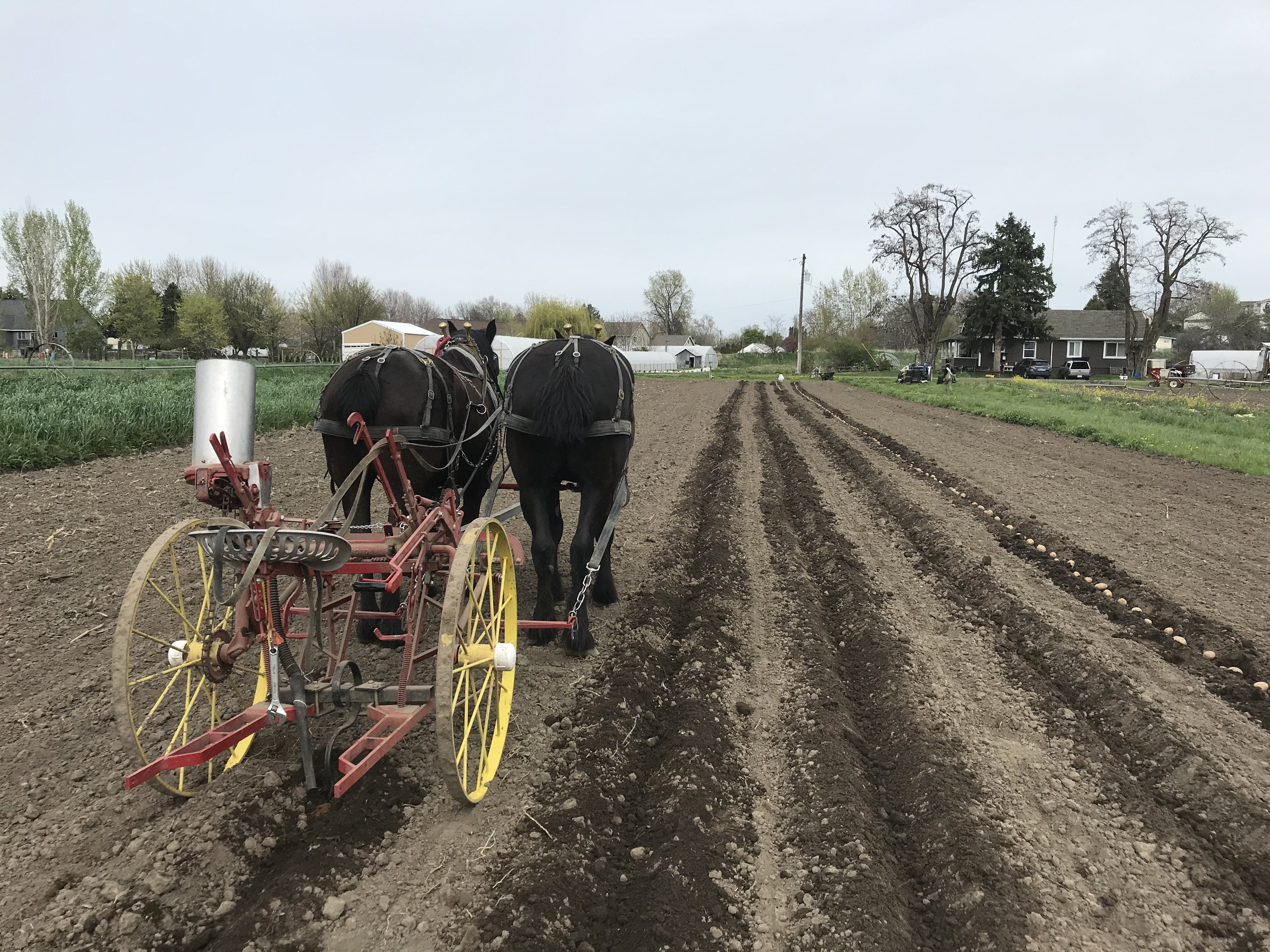 Farm Happenings for April 21, 2020