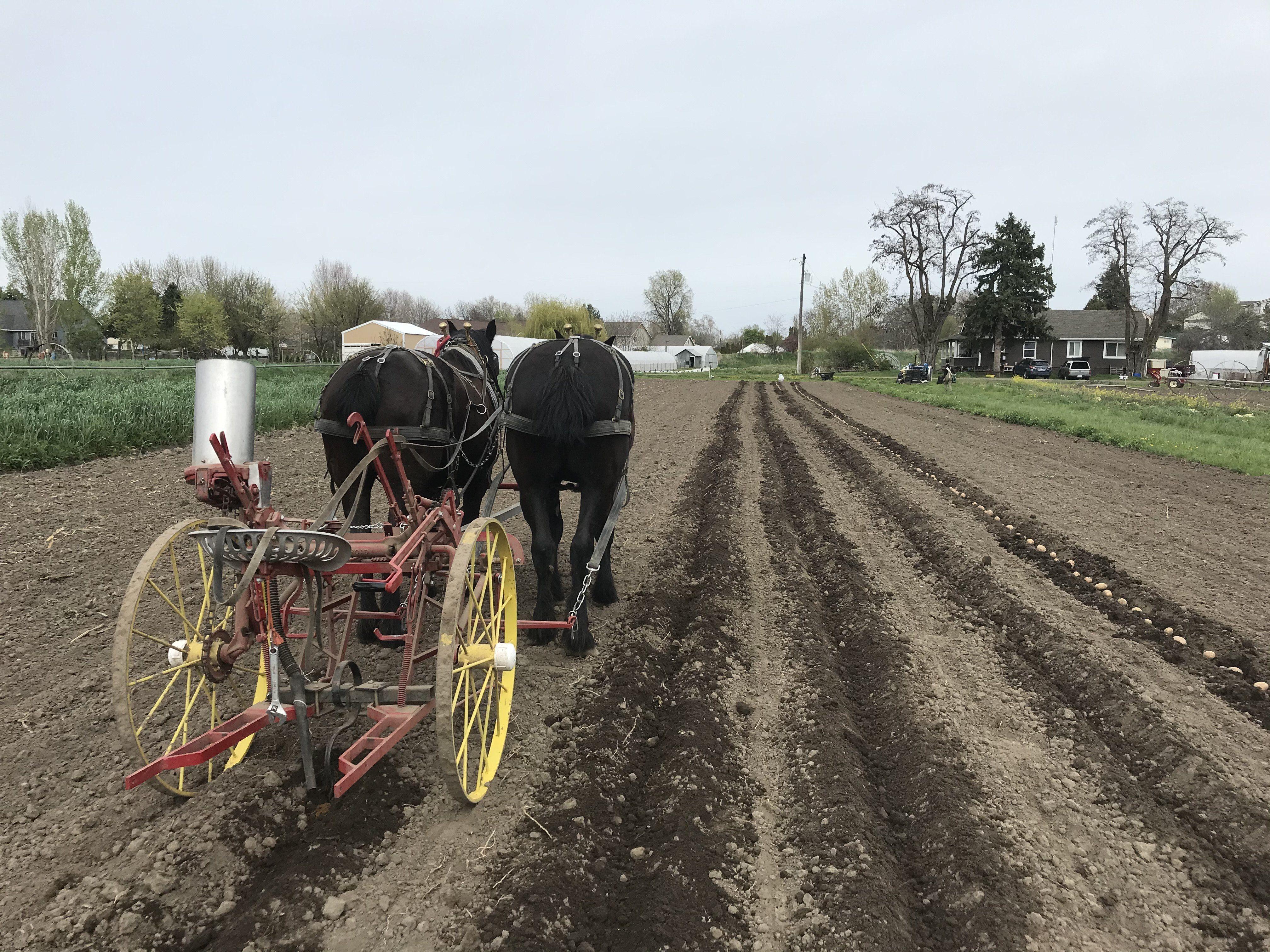 Farm Happenings for April 24, 2020