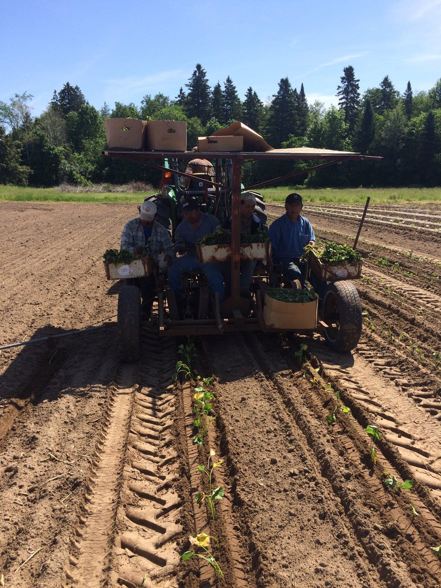Week 13 of 14 Winter/Spring 2020 Vegetable Share: Cooper's CSA Farm Happenings