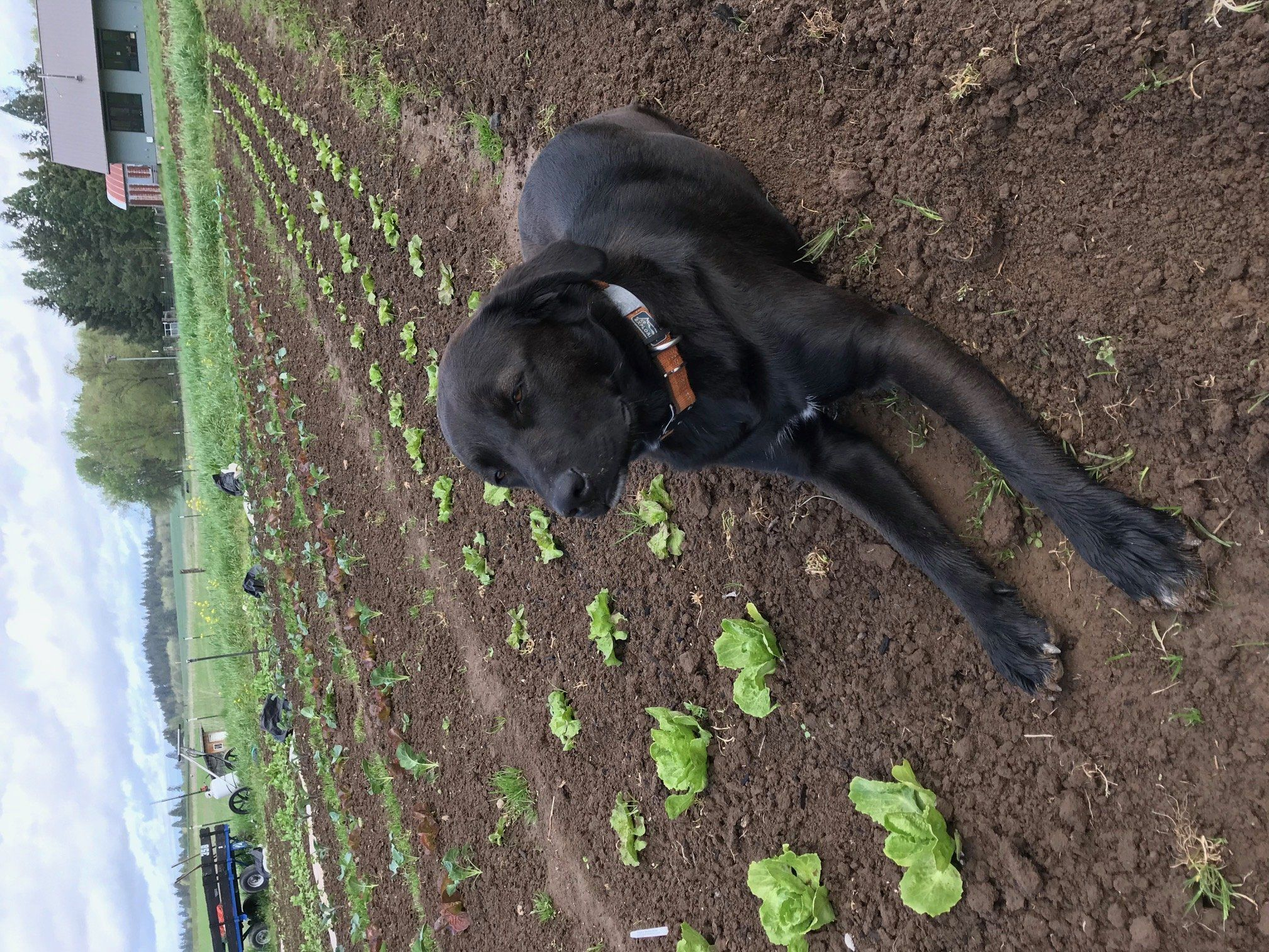 Previous Happening: Farm Happenings for May 2, 2020