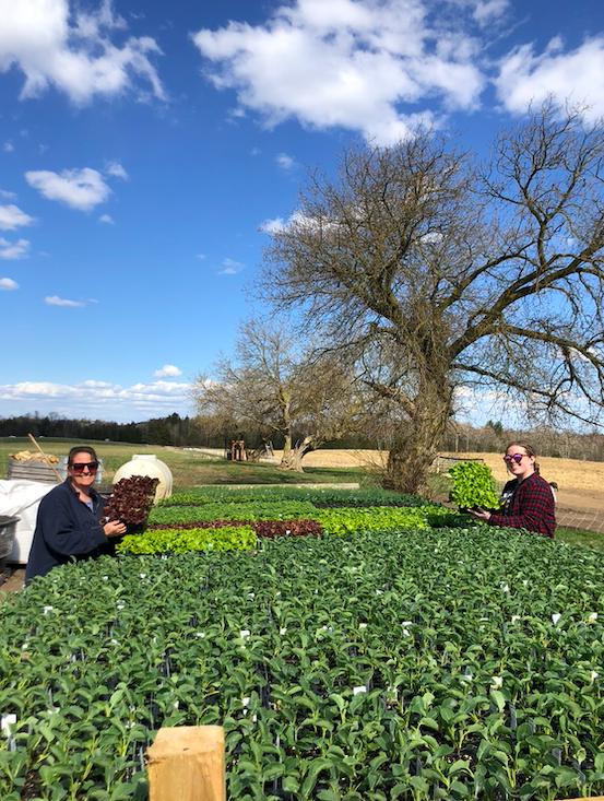 Week 14 of 14 Winter/Spring 2020 Vegetable Share: Cooper's CSA Farm Happenings