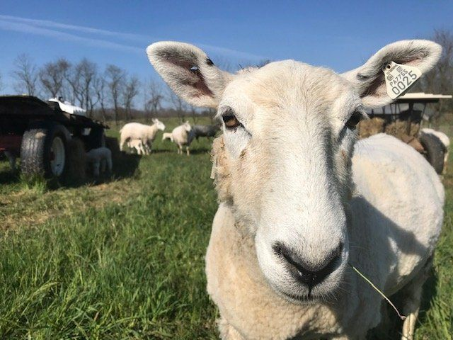 Farm Happenings for May 22, 2020