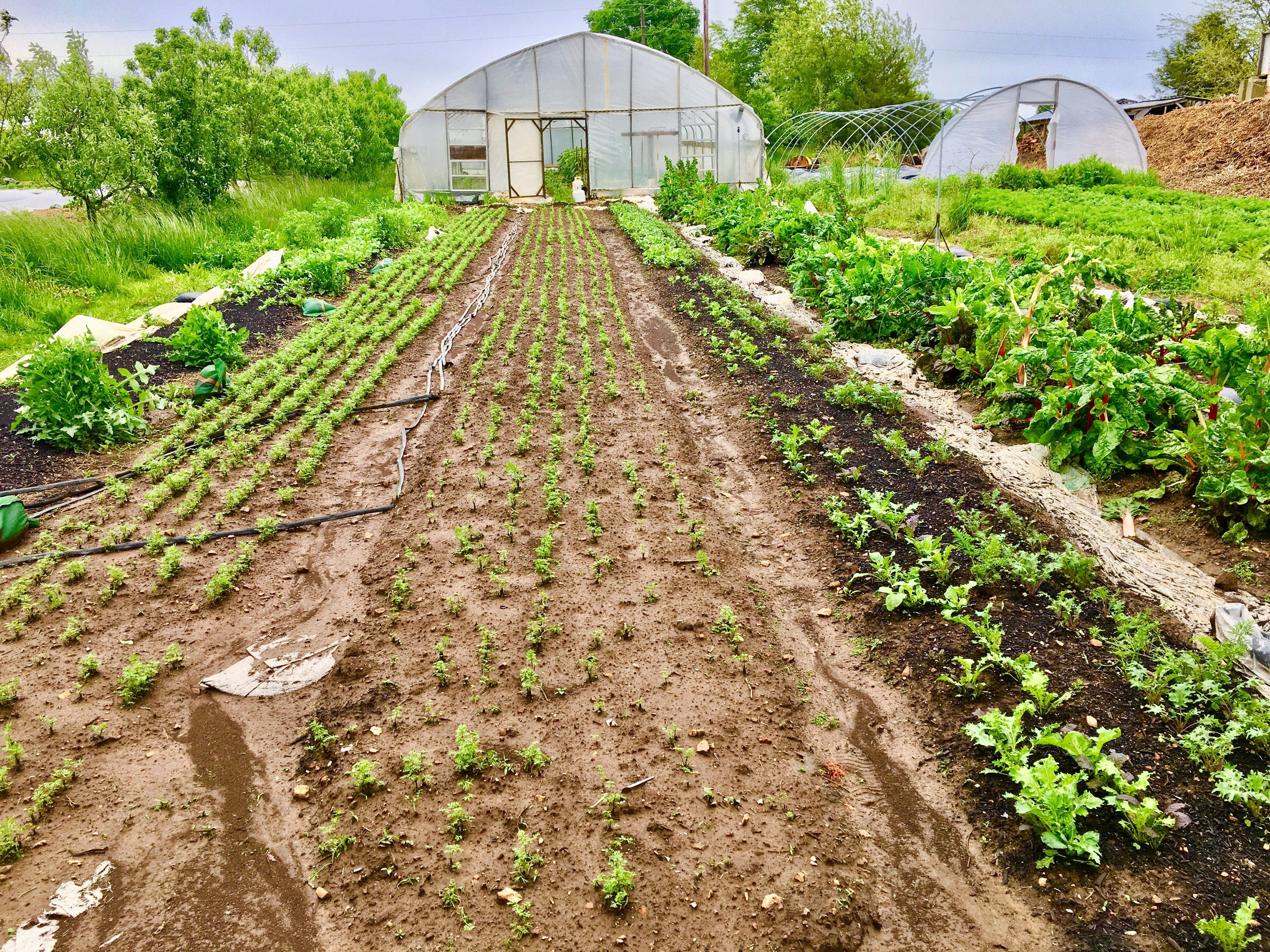 Next Happening: Farm Happenings for May 19, 2020
