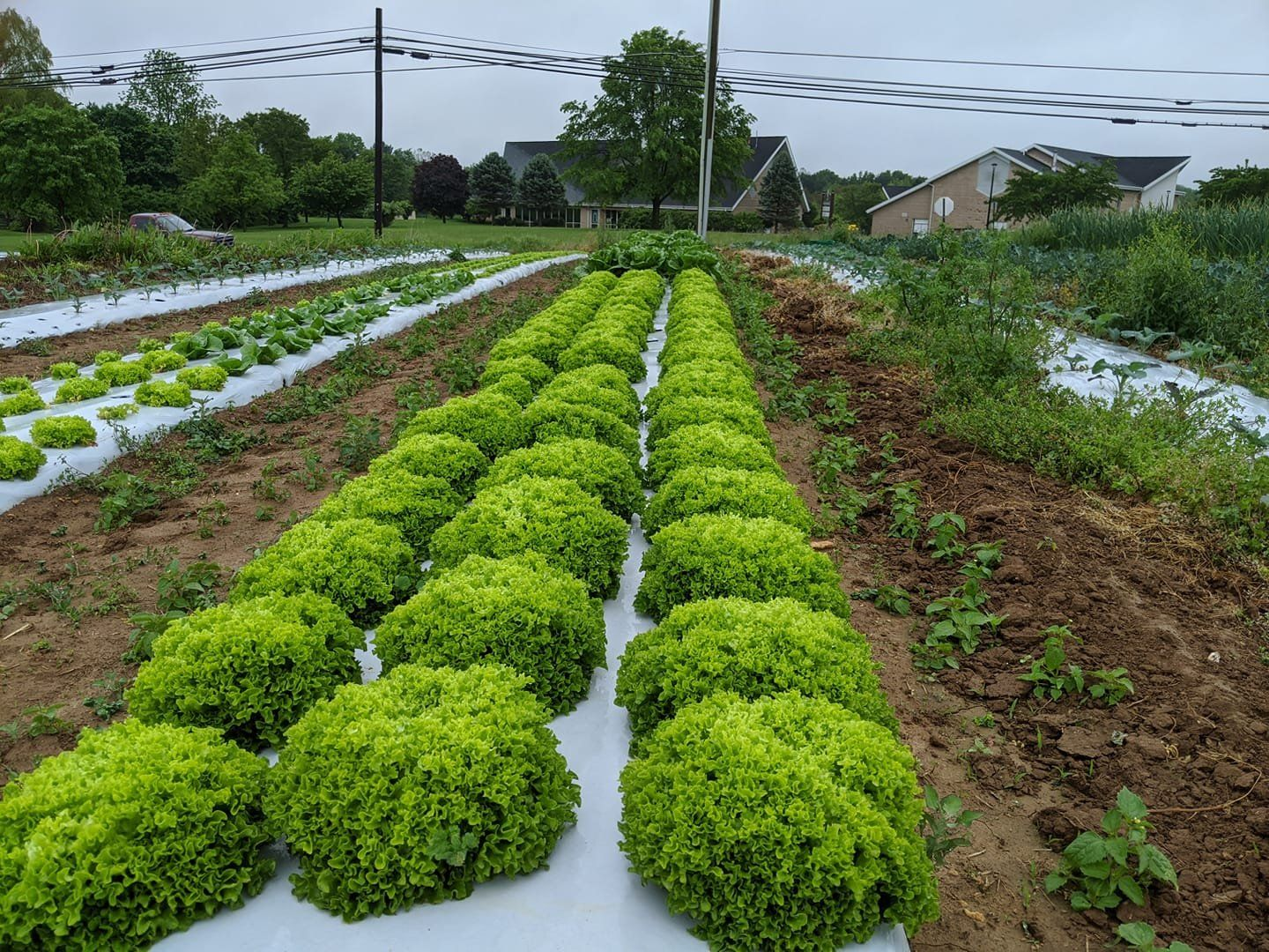 Next Happening: Farm Happenings for May 27, 2020