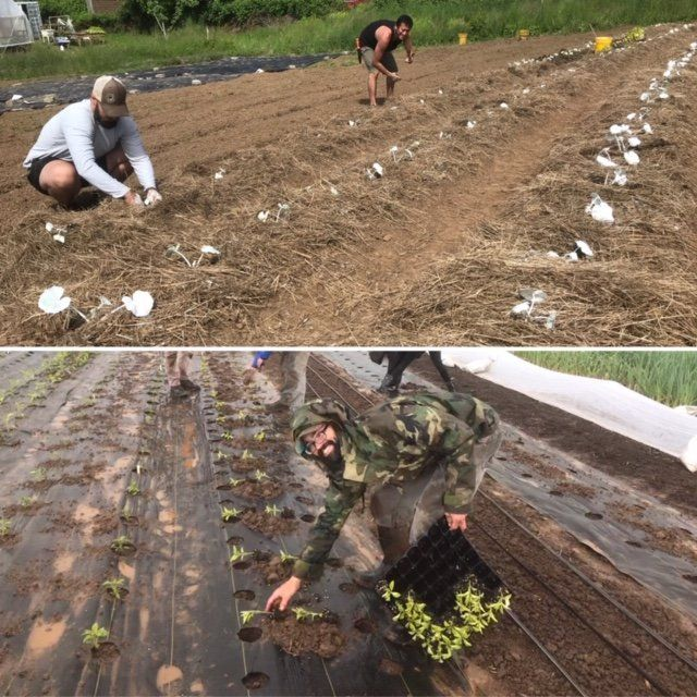 Farm Happenings for May 28, 2020