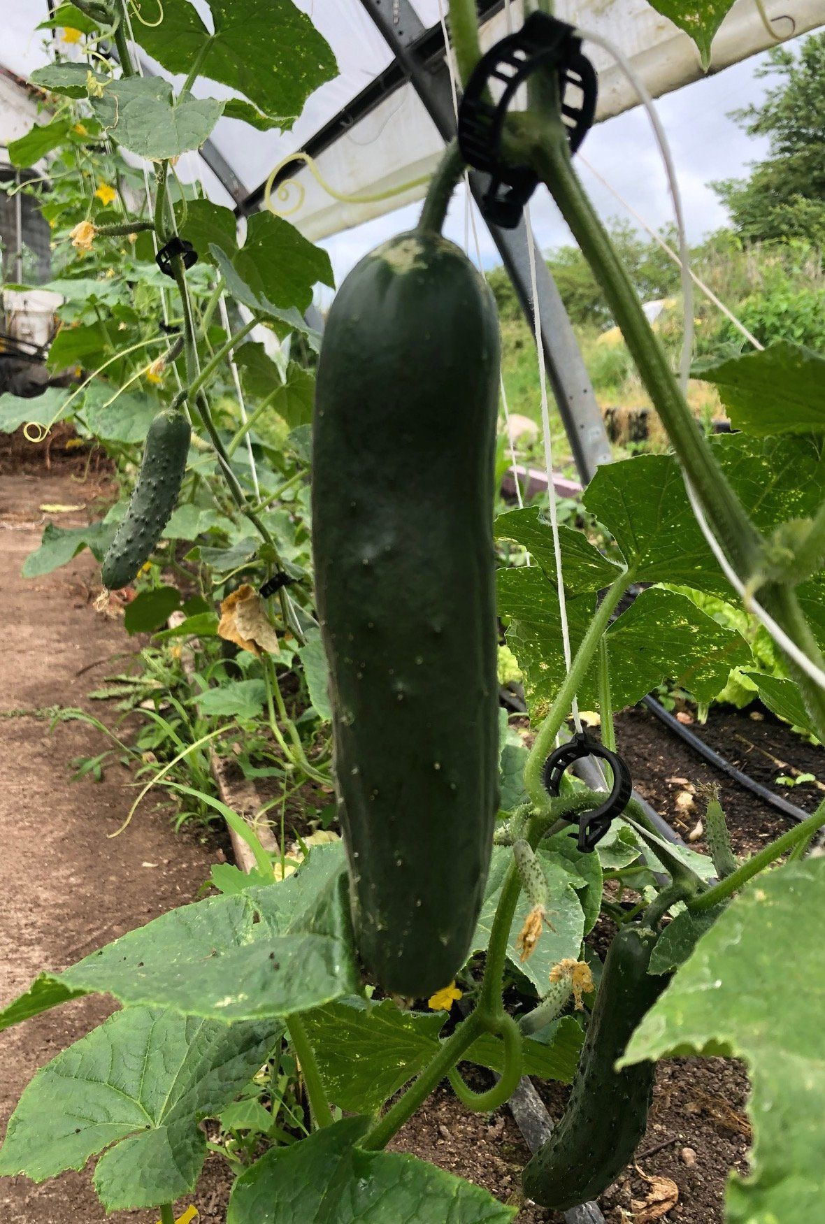 Farm Happenings for May 29, 2020