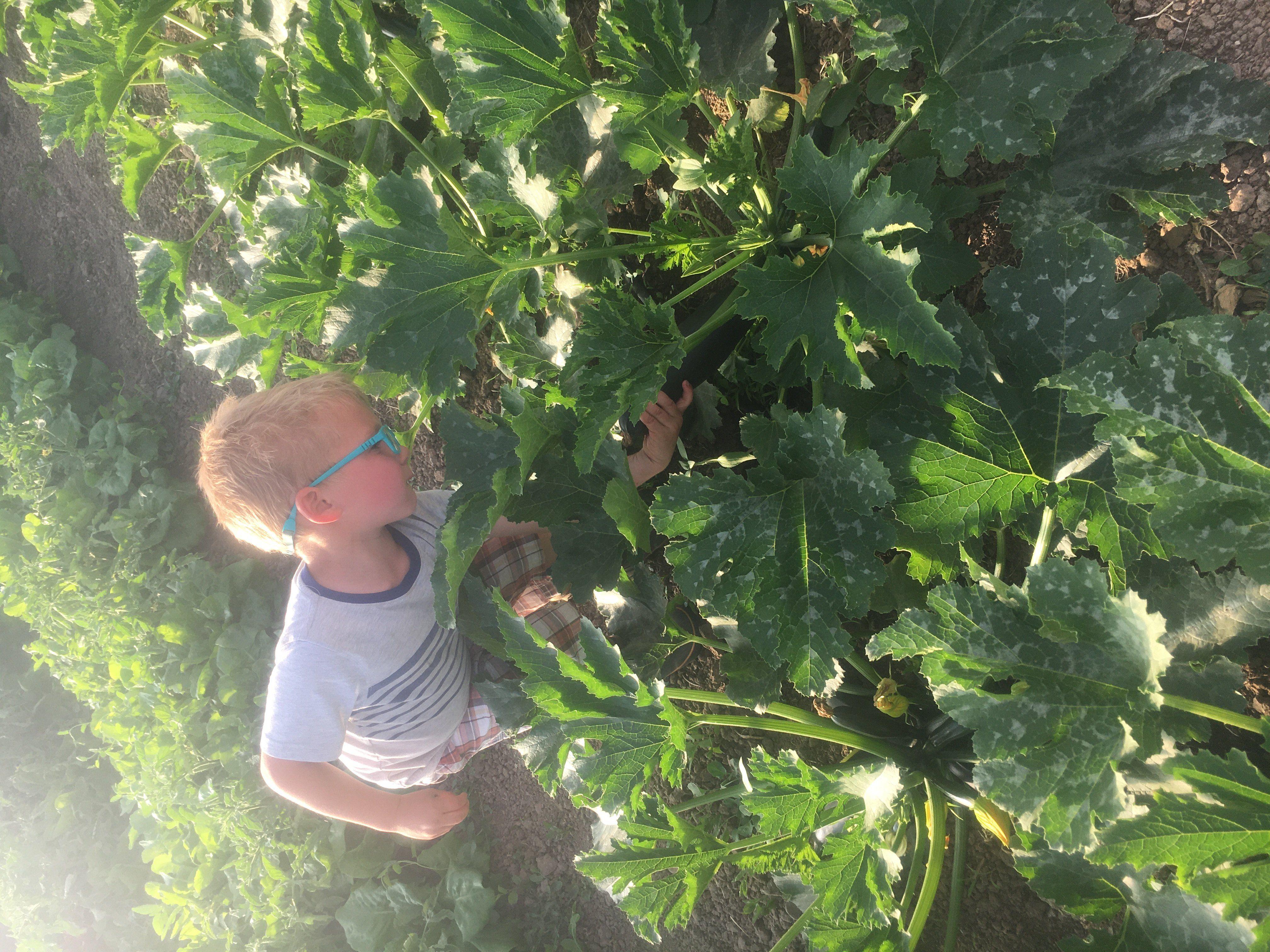 Next Happening: Farm Happenings for June 1, 2020