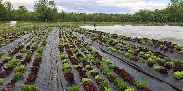 Farm Happenings for May 31, 2020