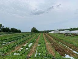 Farm Happenings for June 8, 2020