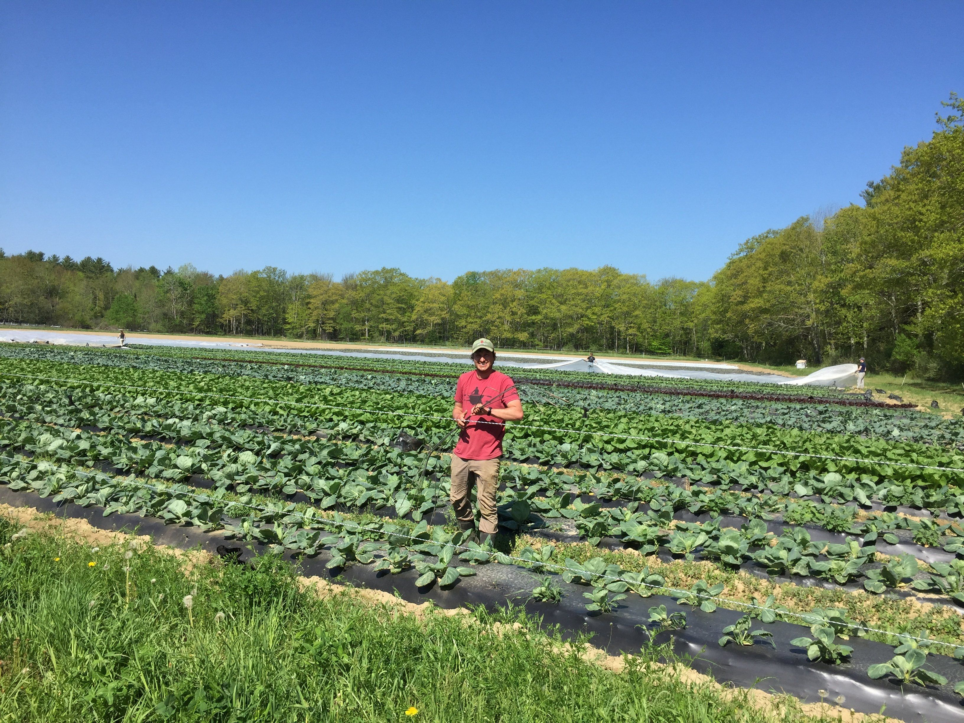 Next Happening: Shares Begin!  Farm and Share update for June 10th/11th Delivery
