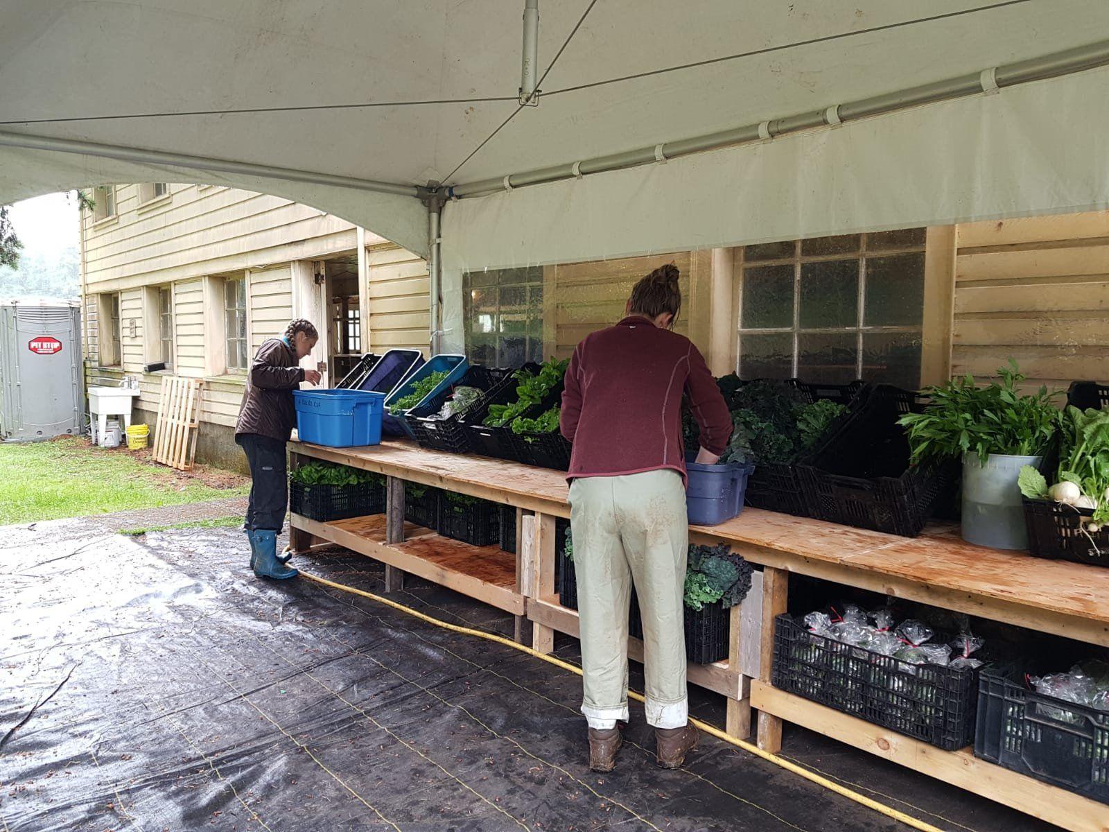 a damp and abundant CSA season opening!...