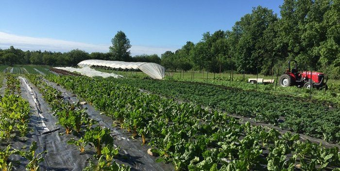 Farm Happenings for June 14, 2020