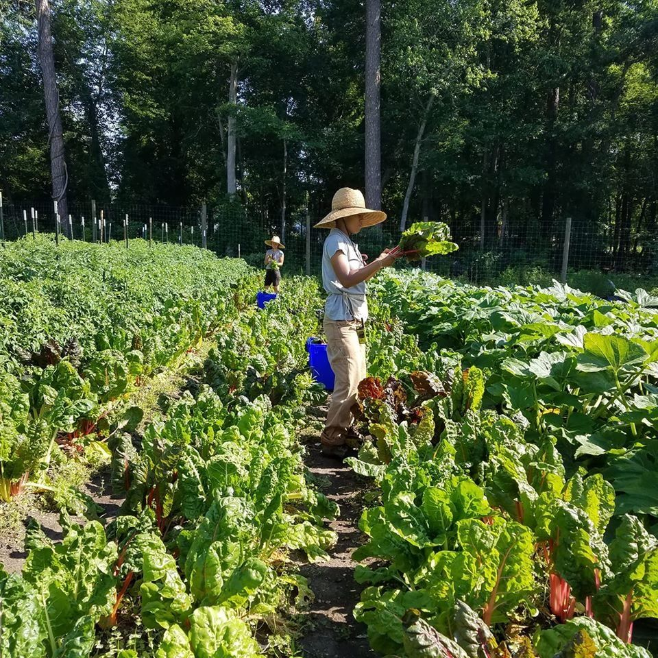 Farm Happenings for June 17, 2020
