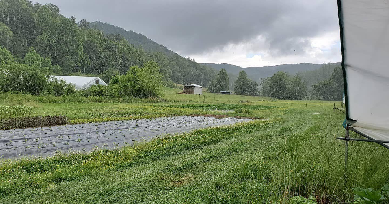 Previous Happening: Farm Happenings for June 23, 2020