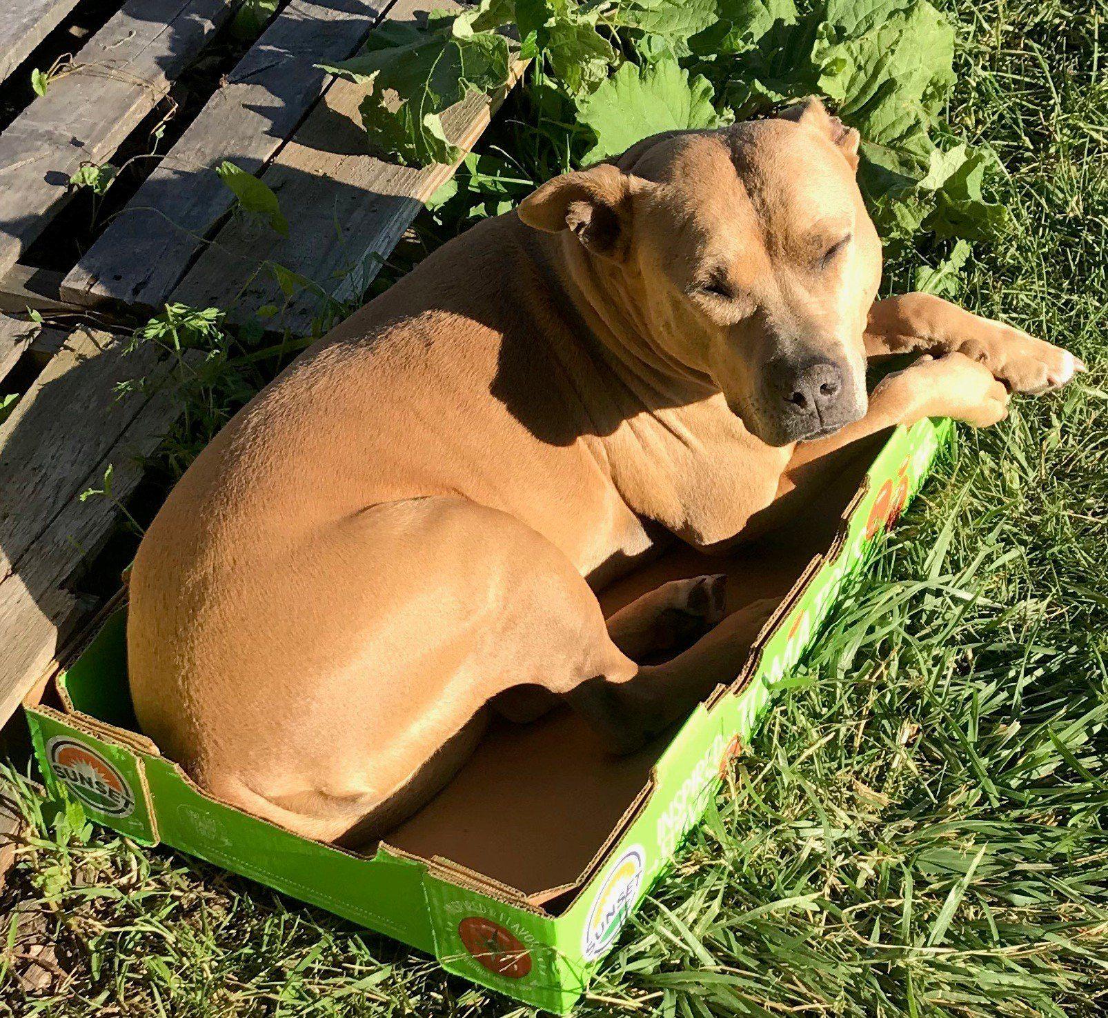 Common Roots Urban Farm CSA Newsletter #3