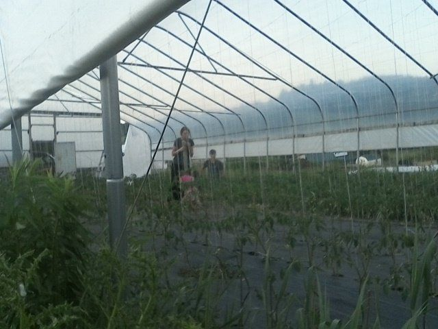 Tomatoes on The Horizon