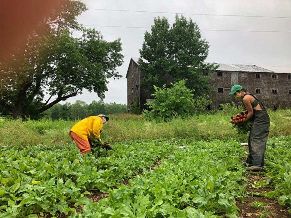 Farm Happenings for 7/7/2020: Summer is Here! & Update from New Beat Farm