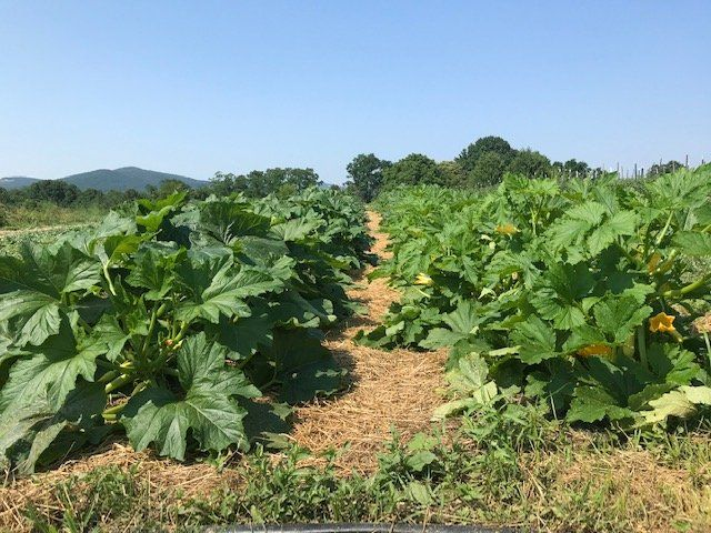Next Happening: Farm Happenings for July 7, 2020