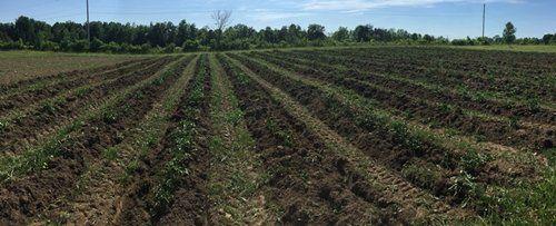 Farm Happenings for July 6, 2020
