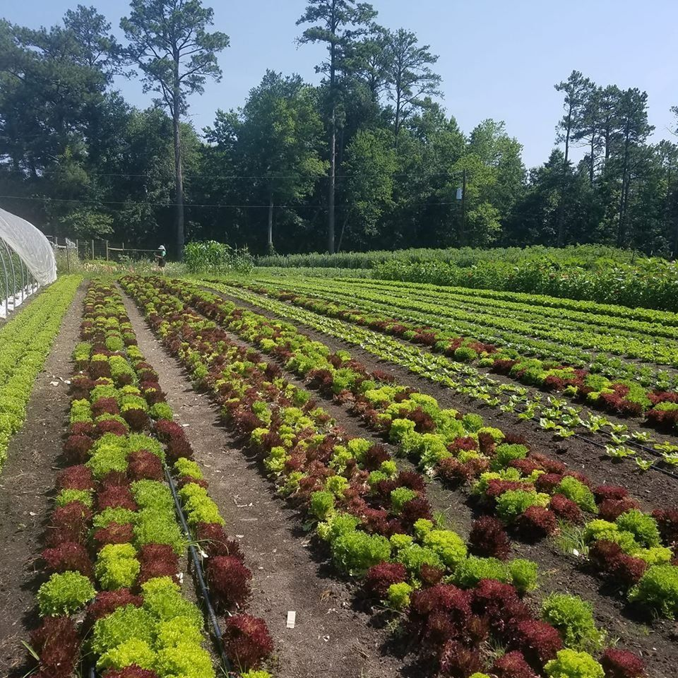 Farm Happenings for July 11, 2020