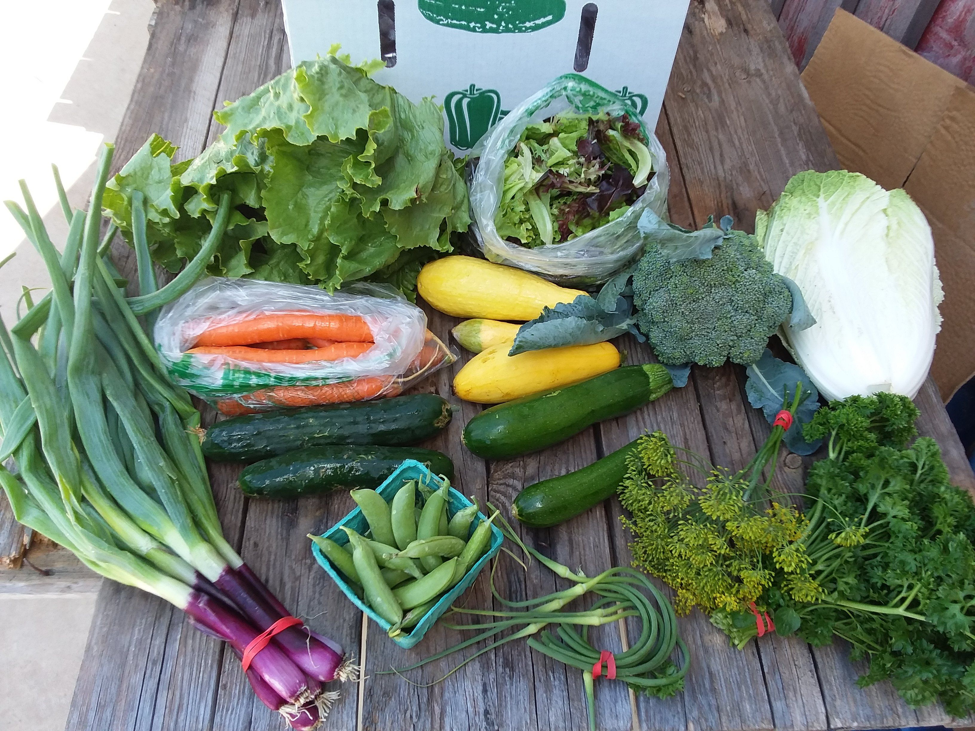 CSA box 6 (Click On Continue Reading to see whole newsletter!)