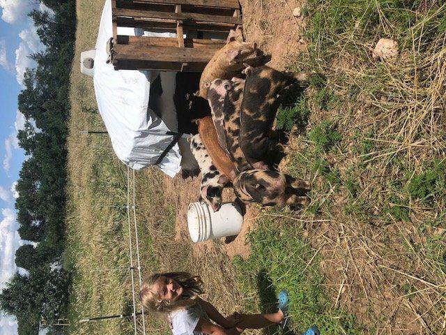 Farm Happenings for July 16, 2020