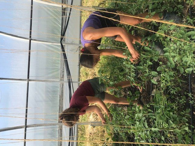 Farm Happenings for delivery on July 15, 2020